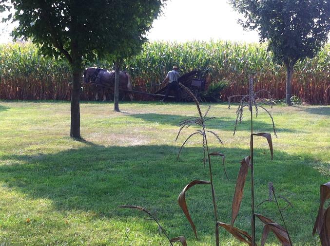 Amish Neighbore Farming