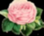 garden-pink-memories_0007_8.png