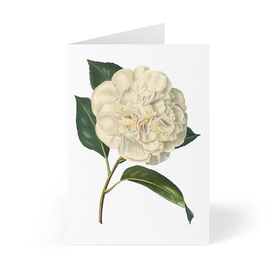 Camila Greeting Cards (8 pcs)