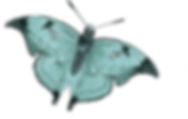 treasure_0006_butterfly.png