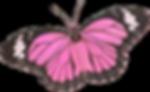 garden-pink-memories_0015_1.png