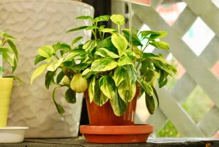 plant_6.jpg