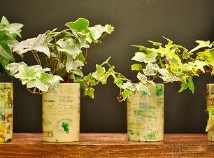 plant_5.jpg