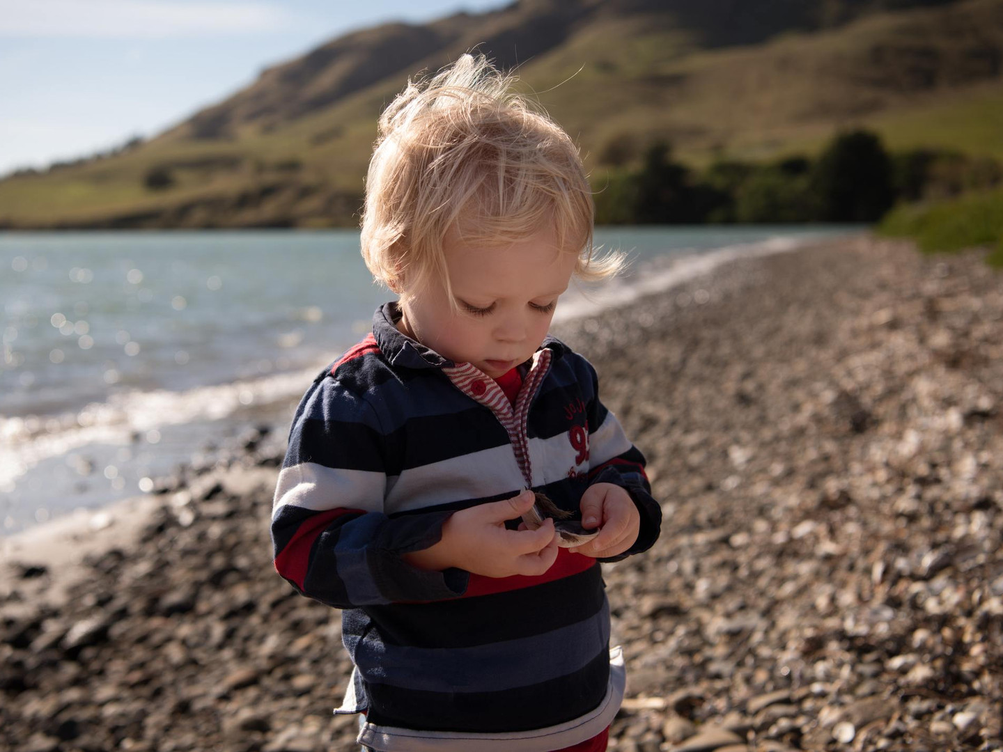Portrait photograph of boy looking at shells on the beach during a family photography session