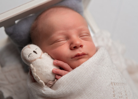Photograph of a newborn baby boy in a bed with a tiny tony owl by Christchurch newborn baby & family photographer Kirsten Naomi Photography