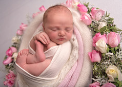 Photograph of a newborn baby girl in a nest of pink roses by Christchurch newborn baby & family photographer Kirsten Naomi Photography