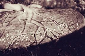 placenta fetal side1.jpg