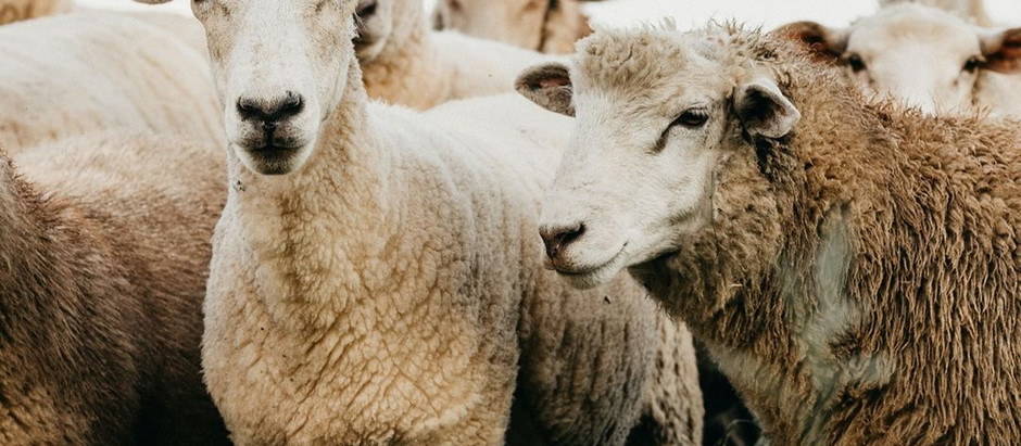 Lessons from the Shepherd About the Rod and Staff
