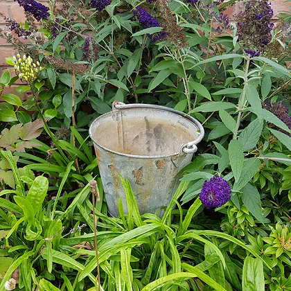 Quality Old Metal Bucket