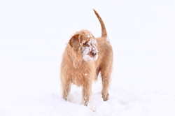 Eric in the snow - Snow Dog!