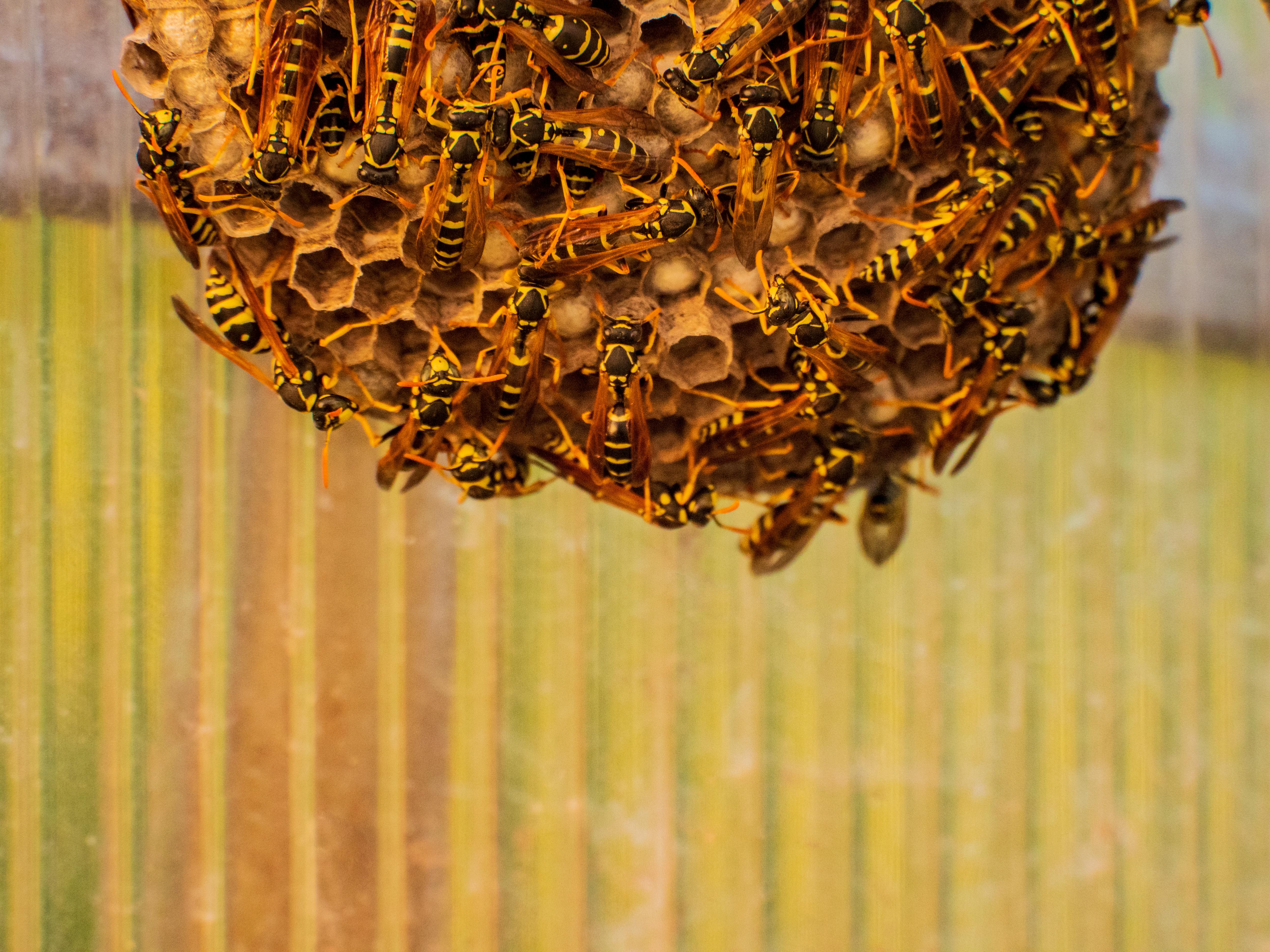 大志建設のハチ駆除