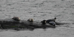 Seals on land
