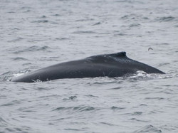 Dorsal fin from the side