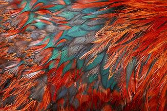 Feathers_Texture_Closeup_460633.jpg