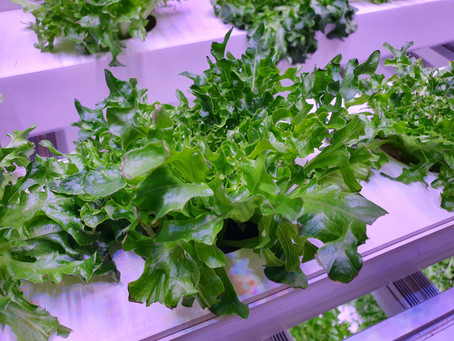 How to build a successful vertical farm