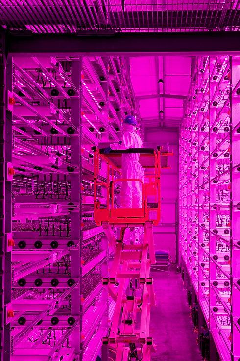 Vertical Farm working UK - LightScienceT