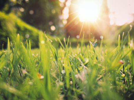 How To Have a Safe and Enjoyable Spring During Seasonal Allergies and COVID-19