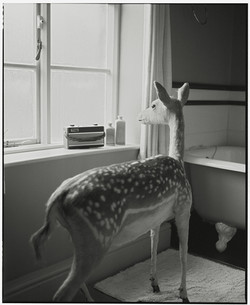 Deer in the Bathroom-2