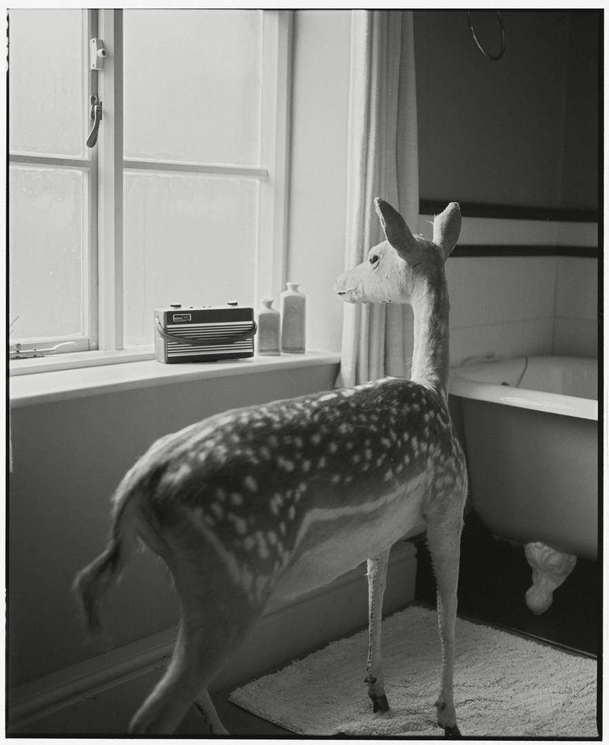 Deer in the Bathroom - 2