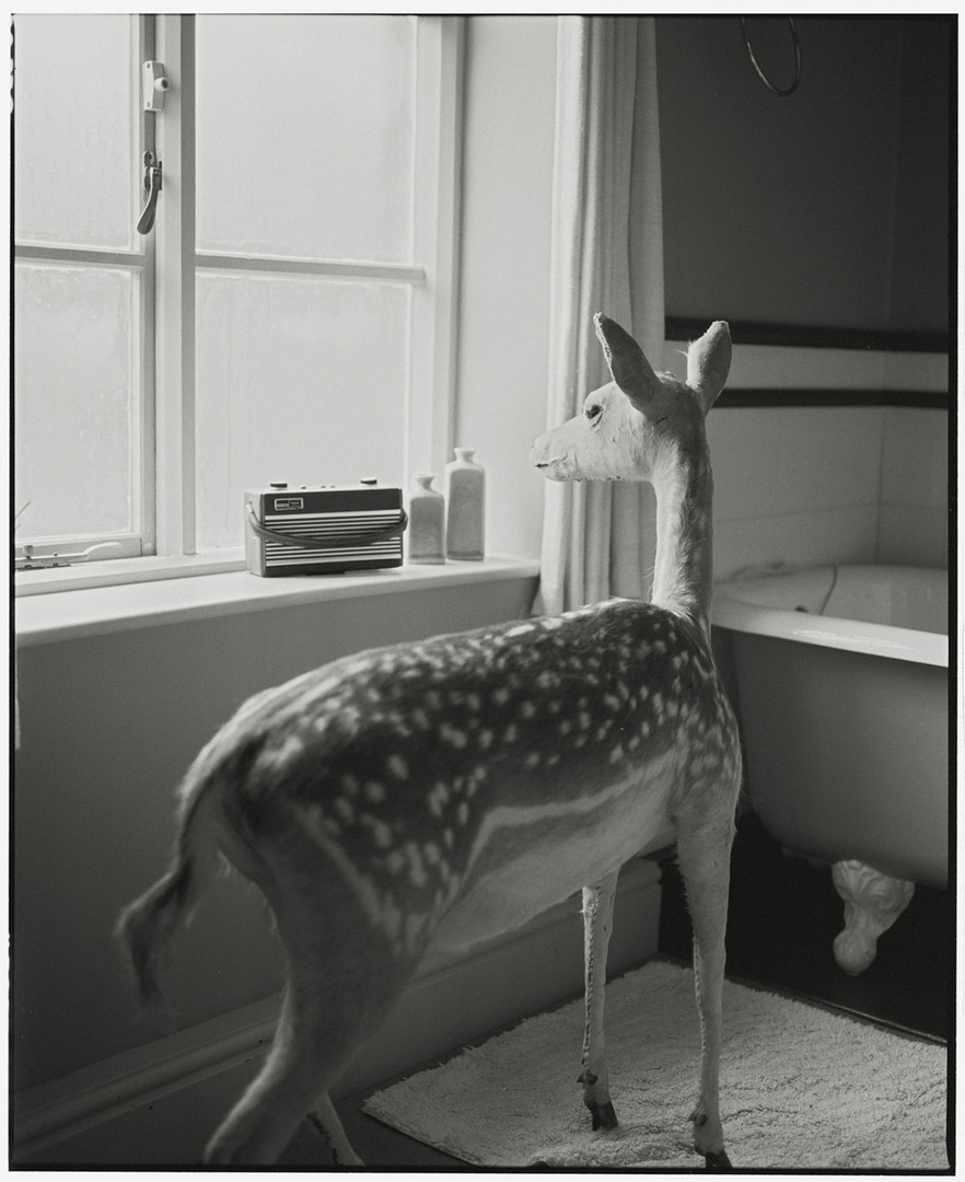 Deer in the Bathroom - 2