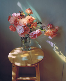 Roses in Coloured Sunlight