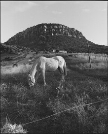 The Grazing Horse 02