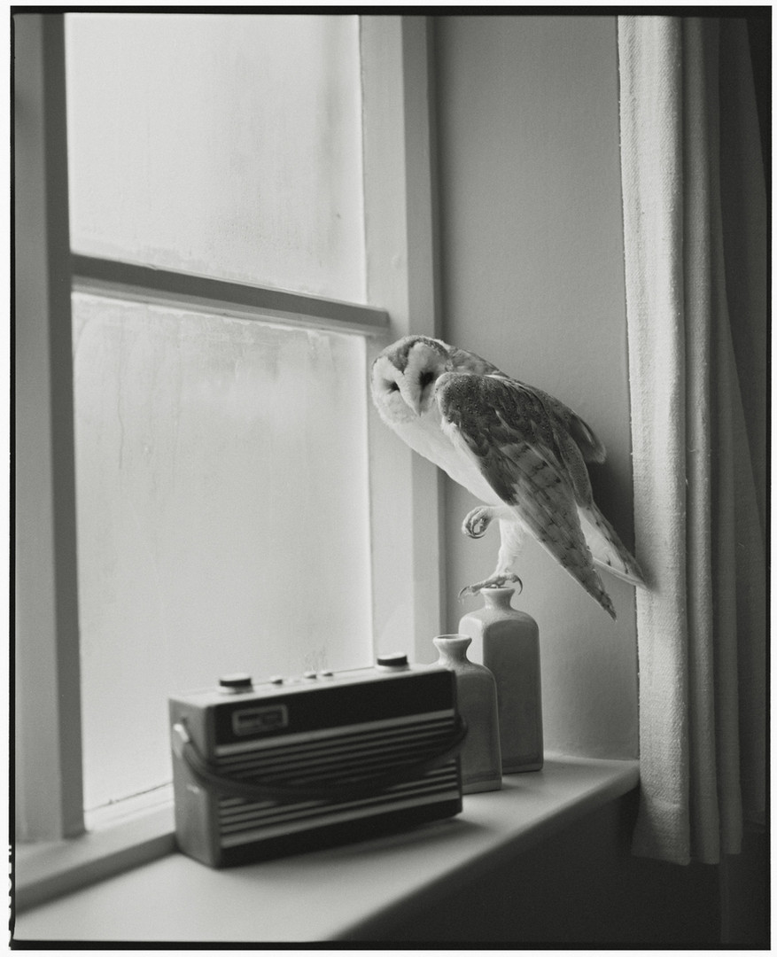 The Owl and the Radio