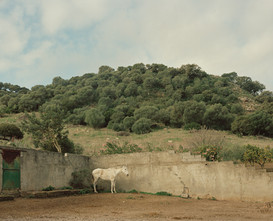 The White Horse of Andalucia