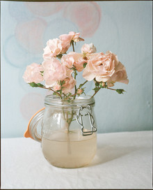 Pink Roses in Muddy Water