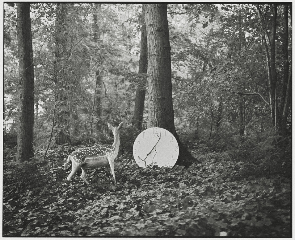 Deer and the Clock
