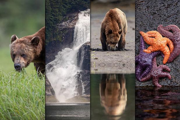 SpringGrizzliesPhoto.jpg