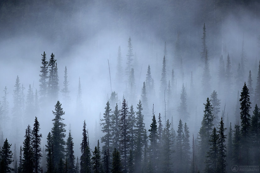 Fog, Trees, and a Raven