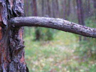 SMOKE BREAK: Morning wood