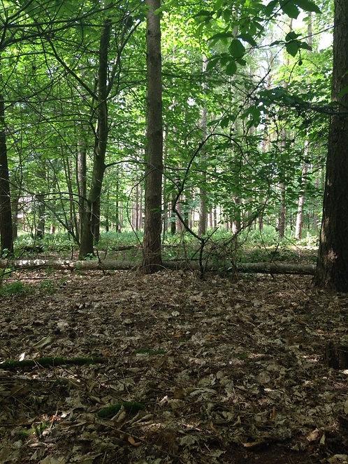 British Woods