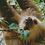 Thumbnail: Cute sloth