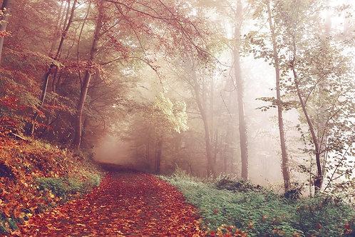 Wood path autumn