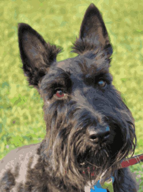 Scottish Dog 40x50cm