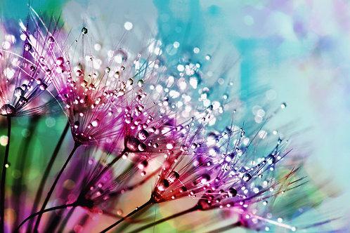 Rain Drop Flowers