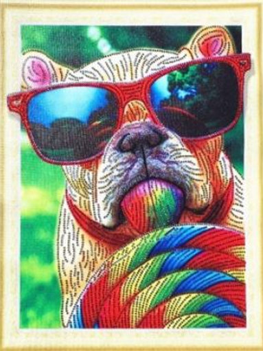 Special cool dog