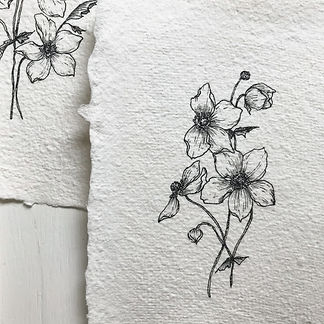 Anemone Drawing.jpg