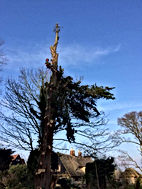 We carry out all kinds oftreework including planting, felling, care and maintenance, and hazard assessments.