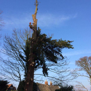 Mark Botwright Tree Surgeon Lowestoft