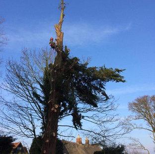 Mark Botwright Tree Surgeon Lowestoft