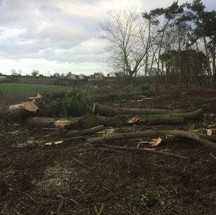 Mark Botwright Site Clearance Lowestoft