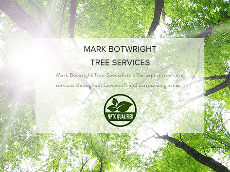 Tree Surgeon Services Lowestoft Suffolk