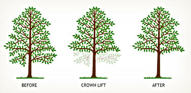 We carry out all aspects of crown lifting increase the clearance between the ground level and the lower branches