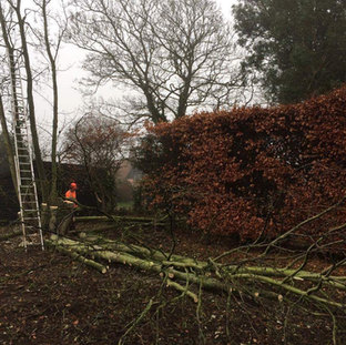 Mark Botwright Tree Surgeon Services Lowestoft