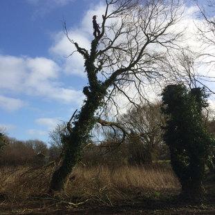 Tree Surgeons Lowestoft