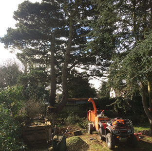 Mark Botwright Tree Services Lowestoft
