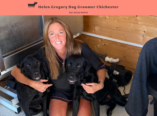 Helen Gregory Dog Groomer Groomers Grooming Chichester